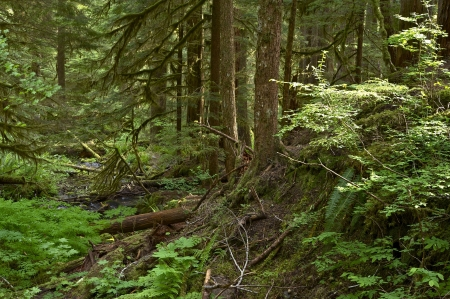 Olympic Forest Trail - Hiking Thru Olympic National Forest. Mossy Creek. Nature Photo Collection. photo