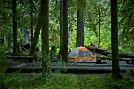 camping tent: Washington, USA Forest Camping and Tent in the Middle. Outdoor Photo Collection.