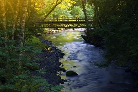 bridge in nature: Small Forest Bridge in Olympic National Park, Washington USA. Stock Photo