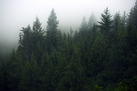 Foggy Forest - Olympic Mountains, Washington State, USA. Mysterious Fog in the Forest. Nature Photo Collection.