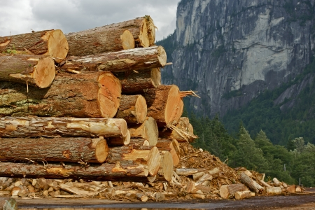wood cutter: Wood Logs Stock Pile - Wood Manufacturing. British Columbia, Canada