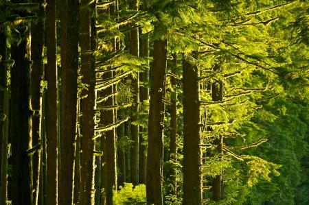 Forêt d'été Mossy - Pacific Northwest / Etats-Unis / Rainforest. Collection Nature Photography. Banque d'images - 14701258