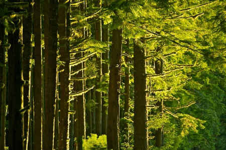 northwest: Mossy Summer Forest - Pacific Northwest  USA  Rainforest. Nature Photography Collection.