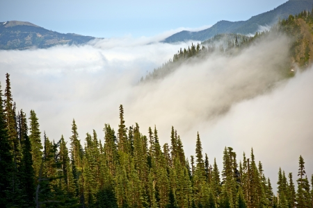 cedars: Cloudy Hills of Olympic Mountains in Washington State, USA. Olympic National Park Rainforest. Nature Photo Collection. Stock Photo