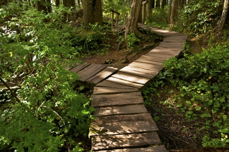 flattery: Two Ways Cross Trail. Wooden Pathway Trail in Olympic National Park. Cape Flattery Trail. Washington State, USA. Recreation Photo Collection.