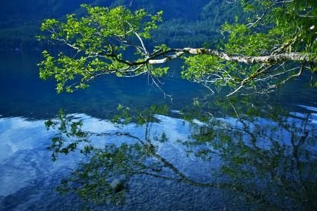 crescent lake: Lake Crescent Clear Waters. Tree Branch Over the Lake. Nature Photo Collection Stock Photo
