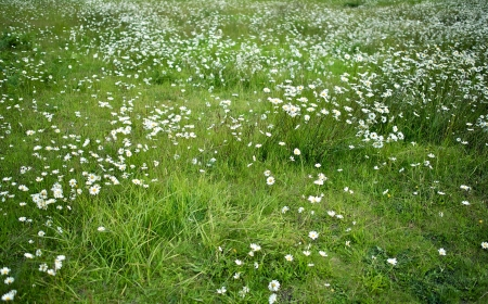 Summer Daisies Meadow Photo Background. Nature Photo Collection.