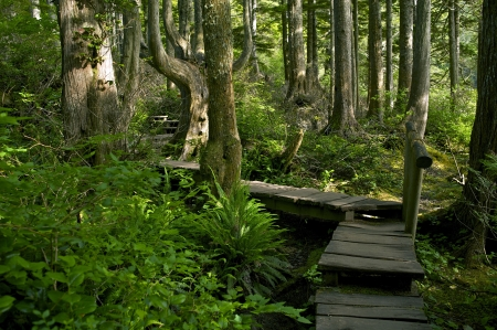Forest Trail to Flattery Cape, Olympic National Park, U.S.A. Wooden Pathway Trail. Recreation Photo Collection. photo