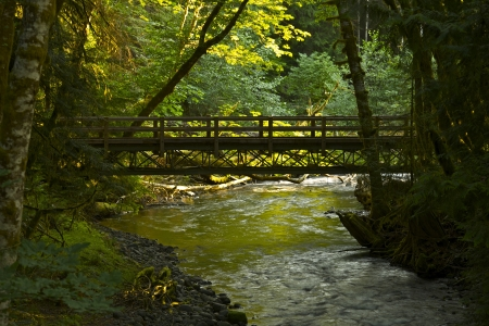 Forest Bridge - Washington State Rainforest. Olympic National Park, USA. Aged Wood Bridge. Recreation Photo Collection. photo