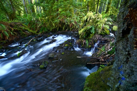 olympic: Small Creek in Rainforest, Washingtons Olympic National Park. Mountain Stream and Small Creek. Nature Photo Collection. Editorial