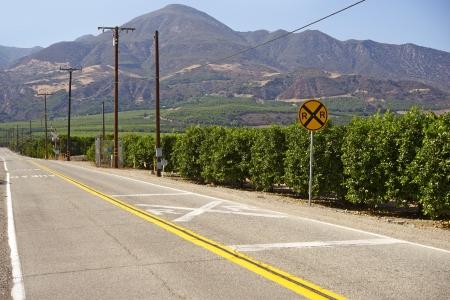 orange industry: Orange Trees in California, U S A  Ventura, California  American Agriculture  Food Industry