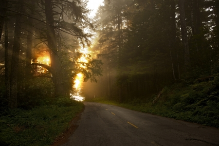 roadway: Road to the Sun. California, USA. Redwood Forest National Park Bald Hills Road.
