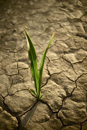 hope: There is Hope. Small Plant on the Cracked Dry Land. Drought Photo Collection.