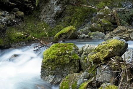 plants species: Cascades Mountains Creek - Rocky Mossy Creek in North Cascades National Park nello Stato di Washington.