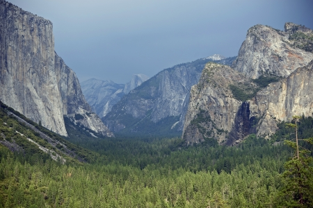 plants species: Yosemite Valley, California, USA. Yosemite National Park  High Sierra - Valle Panorama.