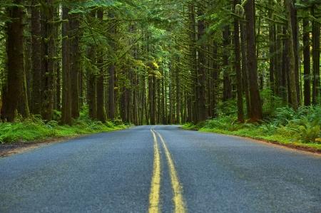 empedrado: Mossy Forest Road - Estado de Washington Olympic Peninsula. Parque Nacional Olympic. Colección de fotografías del estado de Washington. Foto de archivo