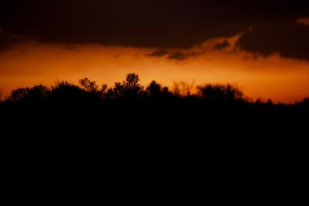 mojave: Desert Silhouette Background - Mojave Desert Sunset Silhouette.