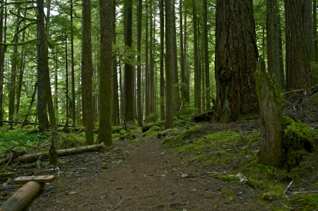 Mossy Forest Nature Photo Background. Forest Landscape - Olympic Peninsula, USA. photo