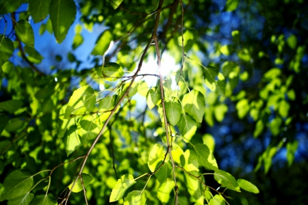 Summer Branches  Summer in the Garden  Nature Photo Collection Stock fotó - 20390970