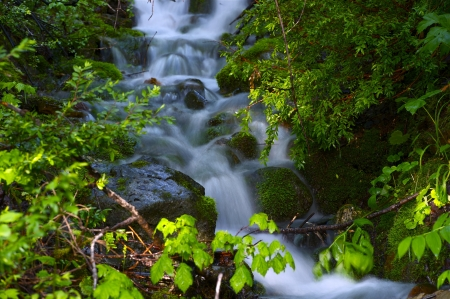 Water Creek - Forest Closeup. Nature Photo Collection. photo