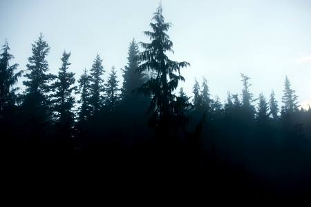 creepy: Dark Foggy Forest Background - Fog in  Forest - Trees Silhouettes. Nature Photo Collection.