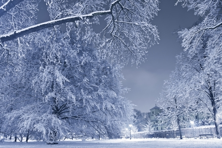 Winter Scenery. City Park Covered by Heavy Snow. Winter Landscape at Night. Nature Photo Collection.