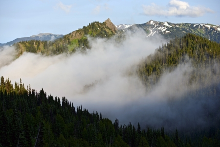 cedars: Olympic Mountains Range in Fog.National Park, Washington, USA. Pacific Northwest Photography Collection.