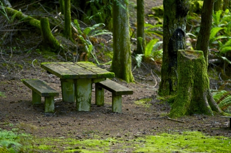 Mossy Bench in the Mossy Forest.  Pacific Northwest Rainforest Park. Recreation Photo Collection Stock Photo
