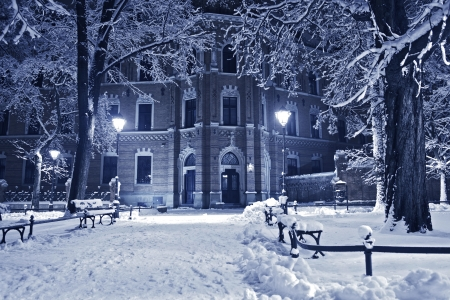 winter field: Old Park in Winter. Night in the European Park. Nature Collection