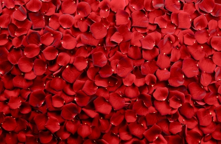 Red Rose Petals Background - Real Roses Petals Backdrop. Floral Backgrounds Photo Collection.