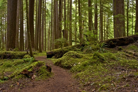 state of oregon: Mossy US Pacific Northwest Rainforest. Northern Oregon State Nature. Forests Photography Collection.
