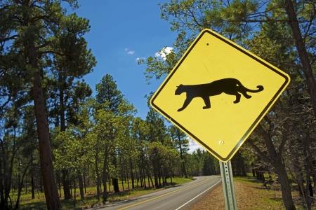 xing: Cougar Crossing - Mountain Lion Xing Traffic Sign in Arizona, USA. Stock Photo