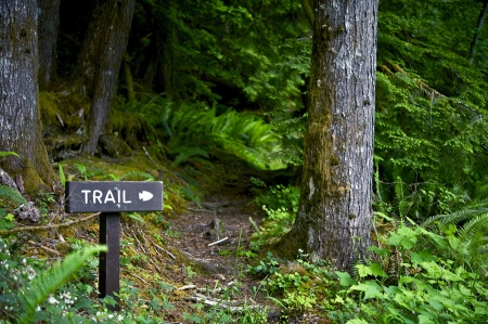 turism: Trail Way Sign - Wood Trail Sign Somewhere in Olympic National Park, Washington, USA. Hiking Theme. Lifestyle Photography Collection