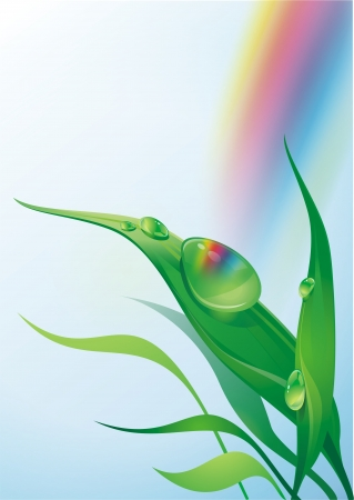morning dew: Morning Dew on the Plant Leaf illustration. Rainbow in the Background. Nature Theme.