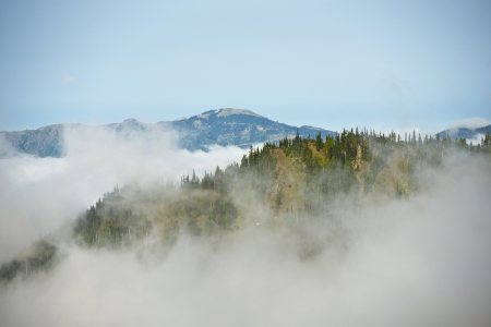 cedars: Cloudy Hills - Olympic National Park in Washington State, USA  Mountains Photo Collection