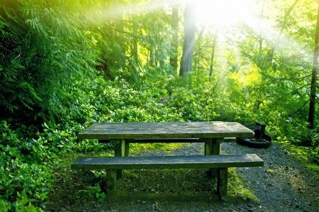 banc de parc: Banc dans la forêt - Pique-nique en bois vieilli table au milieu de la forêt. Spot calme et lumineux. Connexion avec la nature.