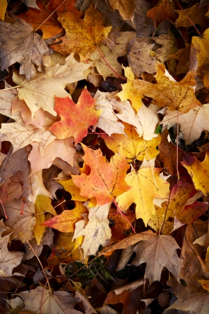 late fall: Late Fall Leaves Background