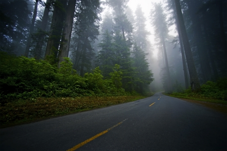 redwood: Mystic Foggy Northwestern Forest Road. Redwood Forest Scenery. Stock Photo