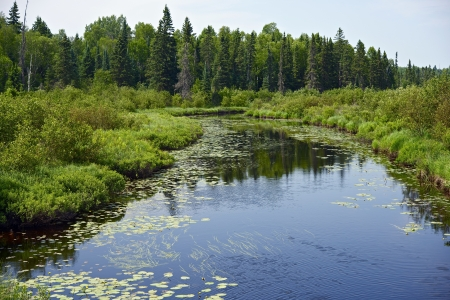 destination scenics: Minnesota Wilderness. Scenic River. Minnesota is a U.S. state in the Midwestern United States. Midwestern Landscapes Photo Collection. Stock Photo
