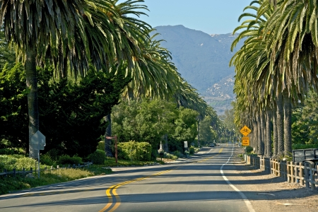 Santa Barbara, California - Palm Trees Road. photo