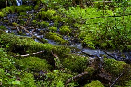 Small Mossy Spring Mountain River Closeup. Montana, USA. Nature Photo Collection.