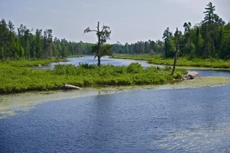 minnesota woods: Northern Minnesota Wilderness Landscape - Minnesota, United States. Nature Photo Collection.