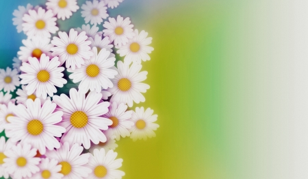 Daisies Background Abstract Illustration. Flowers Illustration. Standard-Bild - 24349865