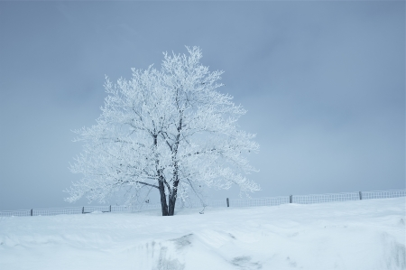 Winter Landscape. Single Tree Covered by Snow. Stock Photo