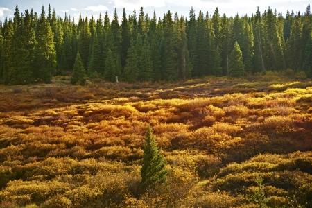 rocky mountains colorado: Summer Colorado Meadow in Rocky Mountains. Colorado Summer Landscape. Stock Photo