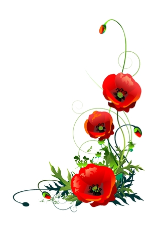 Blooming Red Poppy Flowers Isolated on a White Background. Floral Corner Ornament