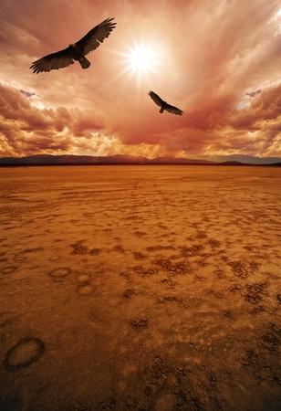 hot summer: Desert and Vultures. Dry Lakebed Desert Scenery.