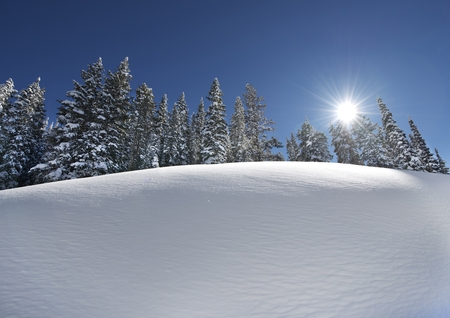 colorado: Snow Slope with Trees Line on Top. Scenic Winter Landscape. Sunny Clear Day.