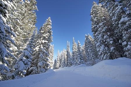 arri�re-pays: Scenic Route d'hiver For�t. Snowy For�t Backcountry Road, dans le Colorado, aux �tats-Unis.