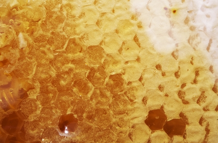 Raw Manuka Honey Cluster. Manuka Honeycomb Closeup. Stock Photo